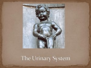 6 Functions of Urinary System
