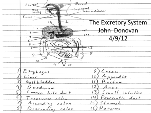 The Excretory System - Local.brookings.k12.sd.us