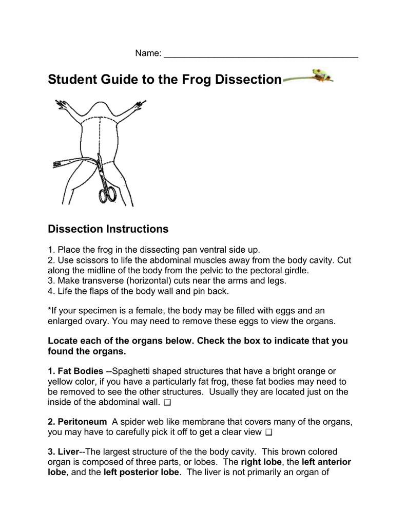 Frog Anatomy Diagram Horizontal - Illustration Of Wiring Diagram •