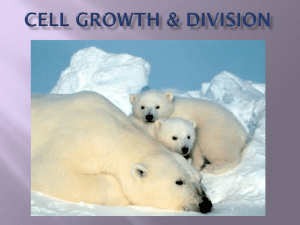 Cell Growth and Division