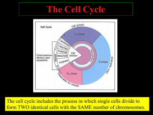 1CellCyclePPT