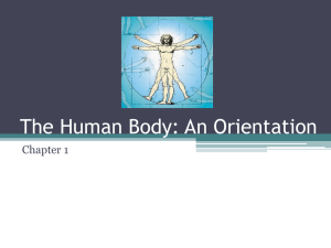 Terminology and Body Planes Powerpoint