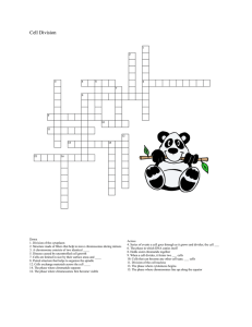 Cell Division Crossword