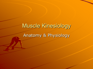 Muscle Kinesiology
