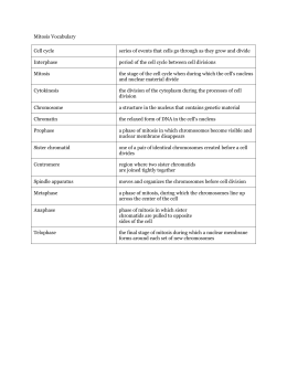 Mitosis Worksheet Diagram Identification Answers ...