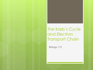 Kreb's Cycle and Electron Transport Chain