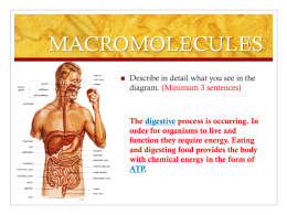 Biomolecules ppt MORE review