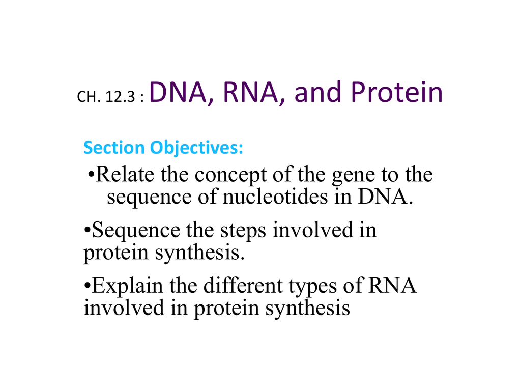 CH. 12.3 : DNA, RNA, and Protein