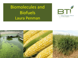 Biomolecules and Biofuels