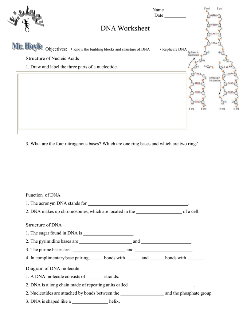 Dna Structure And Function Worksheet >> Hhe together with Microsoft Word   DNA worksheet doc as well DNA    1 The Secret of Life Students   North Clackamas     Pages 1 together with dna worksheets high furthermore 16 New Cell Structure and Function Worksheet Answers   Cross furthermore  likewise  moreover DNA Structure Function Homework Worksheet   Dna   Worksheets as well Dna Structure and Replication Worksheet Answers   Mychaume together with DNA Structure Worksheet by D Meister   Teachers Pay Teachers as well DNA Structure Function Homework Worksheet by Bio4U High Biology furthermore dna coloring worksheet – ebookpdfguide info further dna structure and replication worksheet unit 12 dna worksheet in addition DNA Structure  Function and Replication Review Worksheet   TpT in addition Dna Structure And Replication Worksheet Key Pogil Answers Function further Structure of DNA   D N A structure replication   DNA  Dna molecule. on dna structure and function worksheet