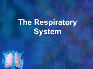 The Respiratory System What is the Respiratory System?