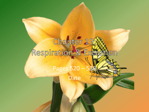 Chapter 19: Respiration & Excretion