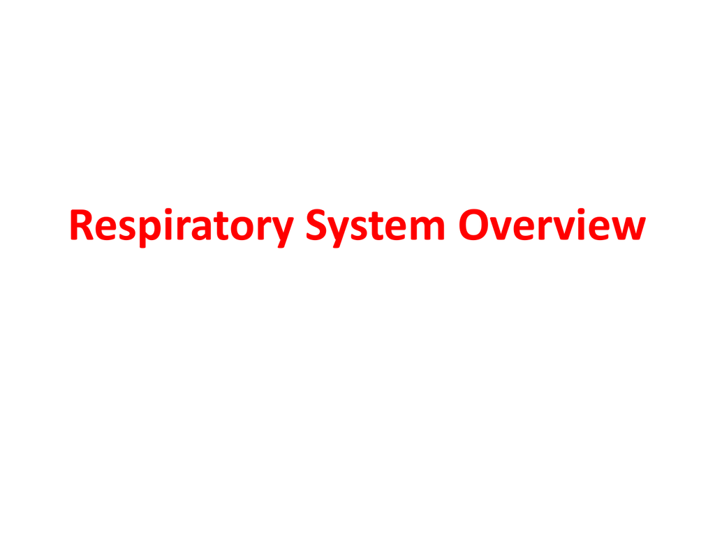 Respiratory System Overview Nasal Cavity