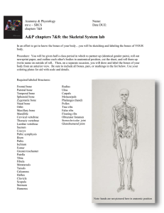 A&P chapters 7&8: the Skeletal System lab