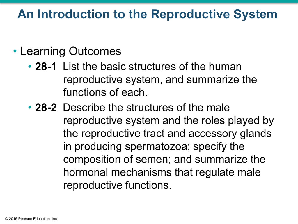 28 3 The Female Reproductive System