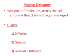 Passive Transport: transport of molecules across the cell membrane