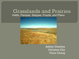 Grasslands Ashley Christine Vince