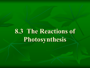 Notes on Photosynthesis