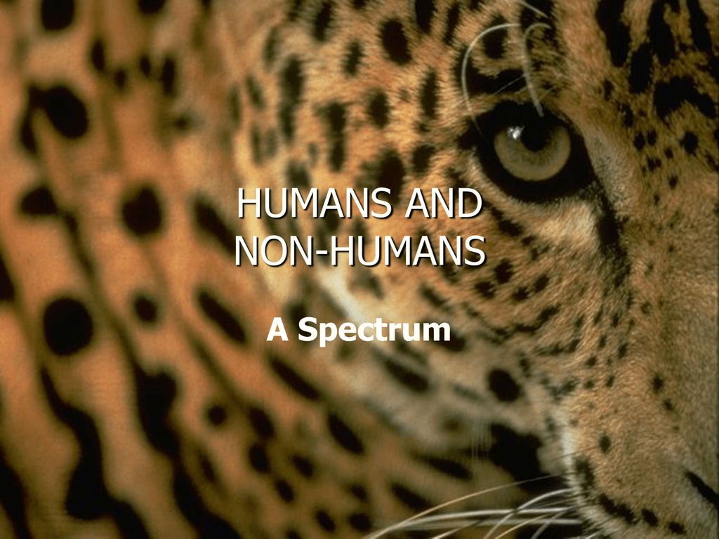 Animal Spectrum Animal Liberation Front