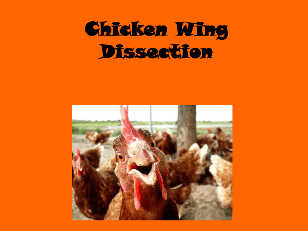 Chicken Wing Dissection Tendon Diagram Muscular System Body Systems 009887114 1 C294bb308f9fd7f83b736e51aa9d6311