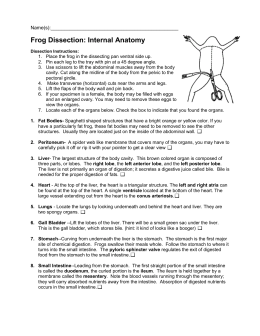 Worksheets Frog Dissection Worksheet Answer Key frog dissection 2014 internal anatomy
