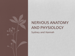 Nervous Anatomy and Physiology