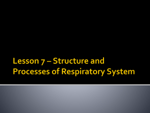 Lesson 7 Structures and Processes of the Respiratory Syst