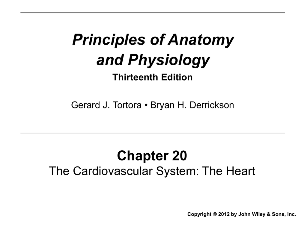 Attractive Anatomy And Physiology Tortora 13th Edition Collection ...