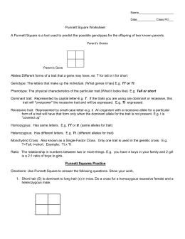 punnett square worksheet human characteristics. Black Bedroom Furniture Sets. Home Design Ideas