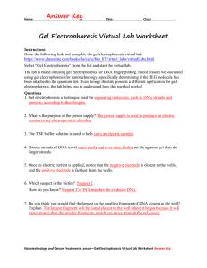 8 Gel Electrophoresis