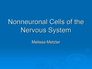 Nonneuronal Cells of the Nervous System