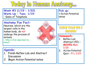 Student Notes Week 3 Action Potential