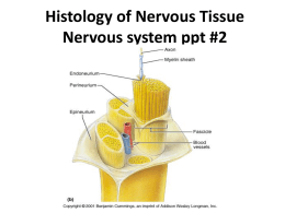 Histology of Nervous Tissue Nervous system ppt #2