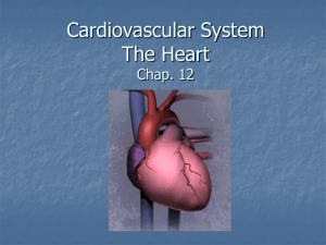 Cardovascular System The Heart Chap. 12