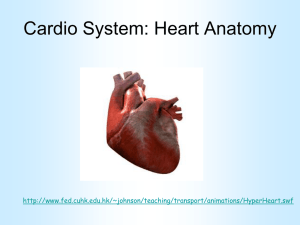 The Cardiovascular System - Heart Anatomy Mar 06 PITS