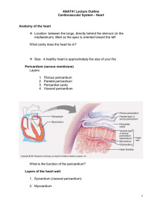 ANAT41 Lecture Outline Cardiovascular System
