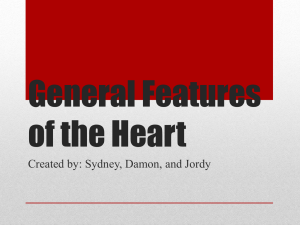 General Features of the Heart