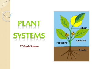 Plant Systems Notes plantsystems12