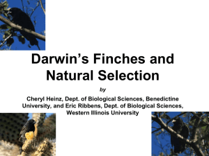 Darwin Finches modified