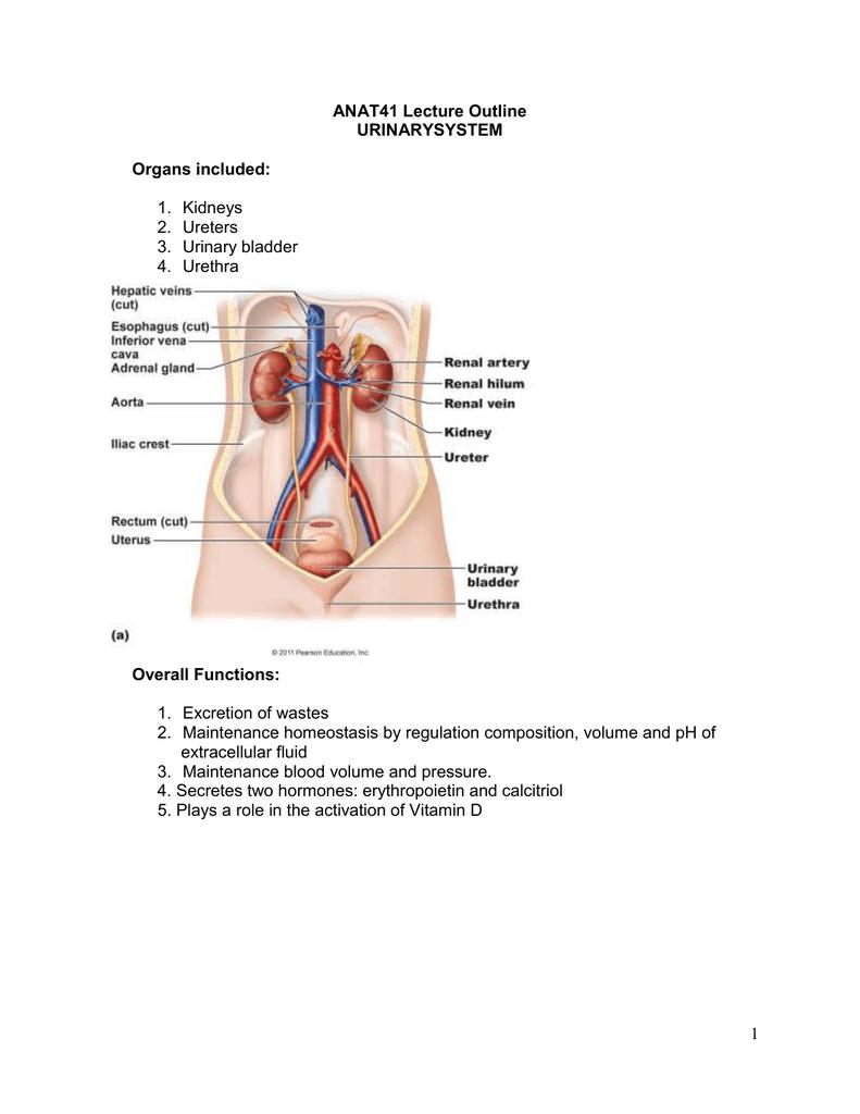Kidney Teacherweb