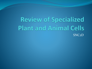 Review of Specialized Cells in Plants and Animal Cells