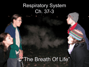 Respiratory System Notes 1112