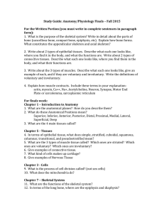 Study Guide: Anatomy/Physiology Finals – Fall 2015 For the Written