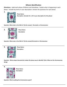 Mitosis Practice Worksheet