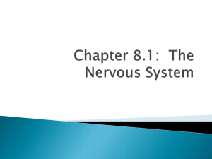Chapter 8.1: The Nervous System