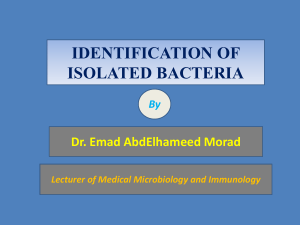 5. Identification of bacteria