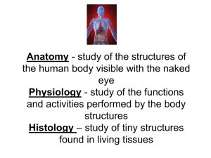 Anatomy - study of the structures of the human body visible with the