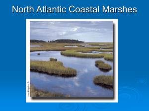 4. North Atlantic Coastal Marshes