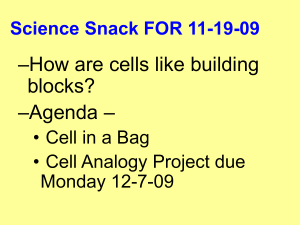 Cell Analogies Worksheet