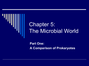 Chapter 5: The Microbial World
